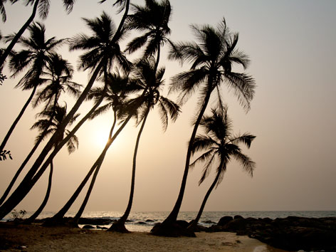 Bureh Beach palm trees at sunset, Sierra Leone