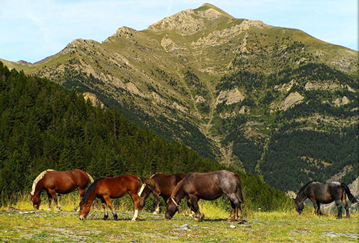 Andorran countryside, with horses