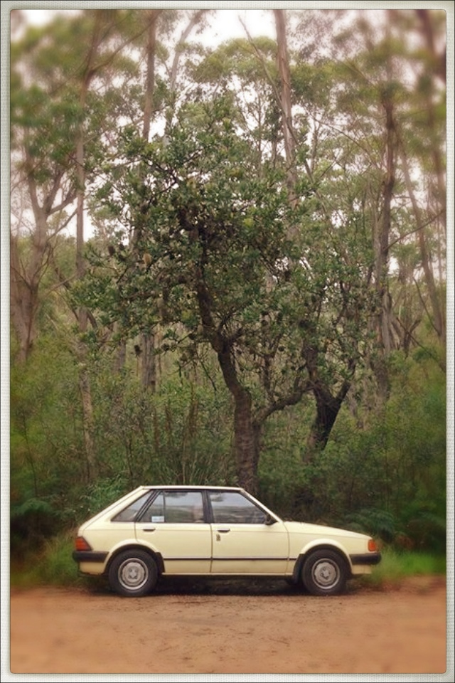 A 1984 Ford Focus, in Australia