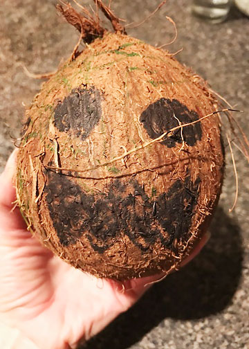 A coconut decorated like a kakamora pirate from Moana.