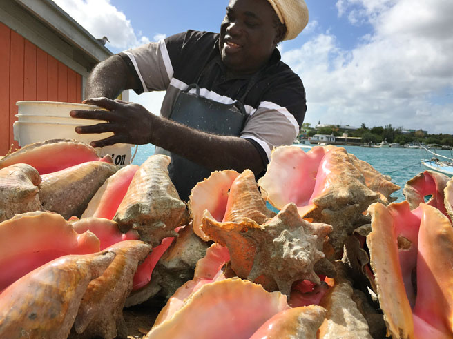 Man selling conch shells in Nassau, the Bahamas