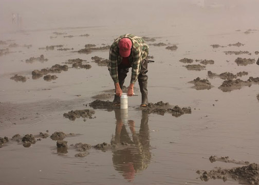 A man uses a clam gun to dig for razor clams on the Washington coastline