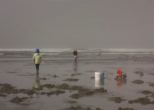 Digging for razor clams off the Washington coastline