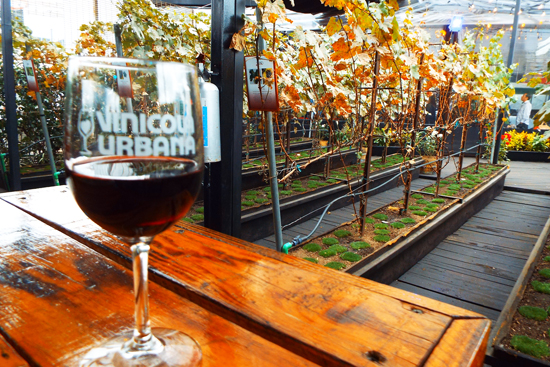 Glass of wine at Vinicola Urbana, a rooftop winery in Mexico City
